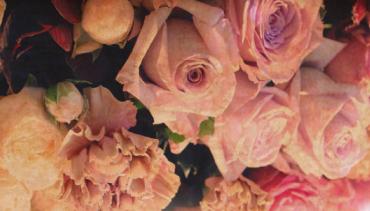 vroueaand rose